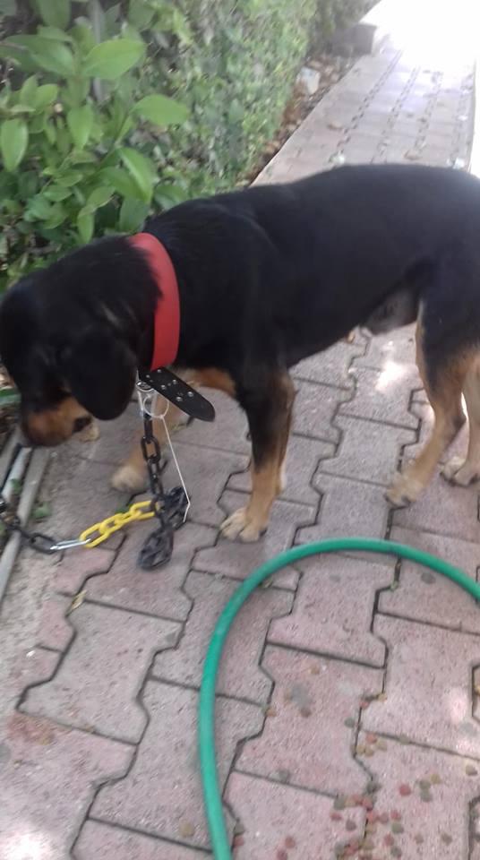 Βρέθηκε αρσενικός σκύλος στο νοσοκομείο Υγεία