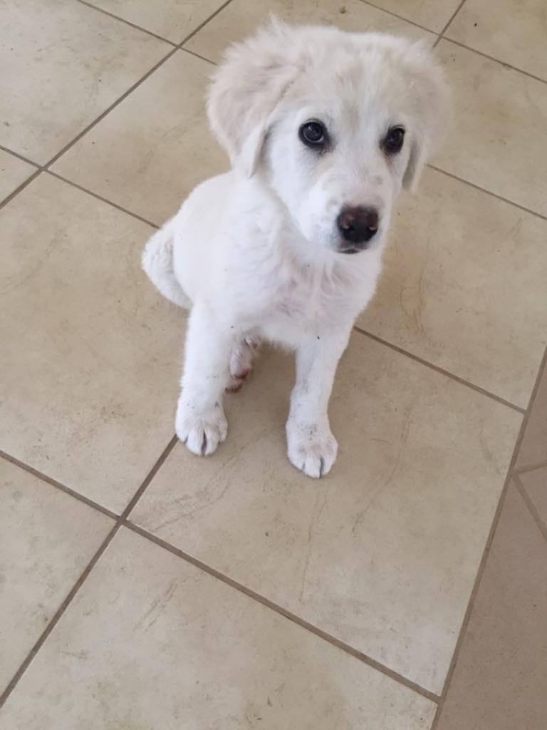 Σκυλάκι 2 μηνών κουταβάκι ψάχνει απεγνωσμένα σπιτάκι!