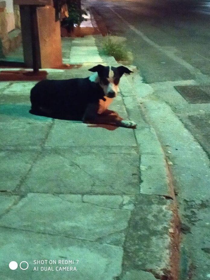 Χάθηκε σκύλος Βρέθηκε στην Αργυρόκαστρου στο Παπάγο