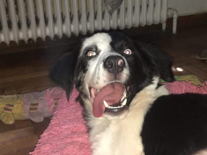 Σκύλος: Παράλυτος σκυλάκος χρειάζεται οικονομική βοήθεια