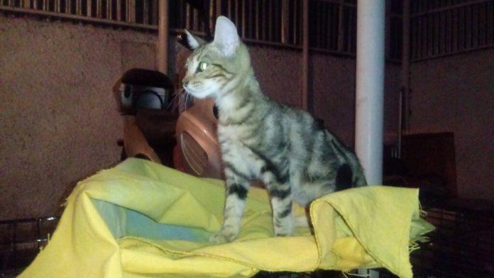Γατάκια: Βρέθηκαν παρατημένα κοντά στον ΕΟΦ Χολαργού