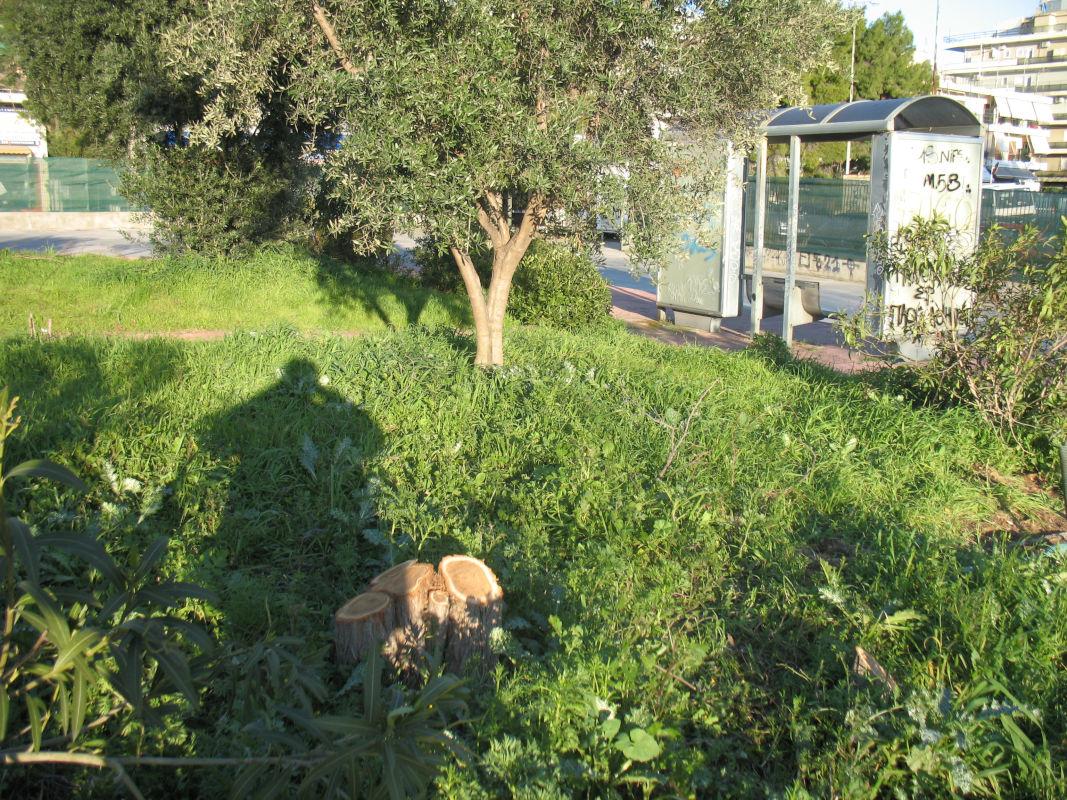 Εθνική Άμυνα: Κοπή δένδρων στην πρώην αφετηρία λεωφορείων