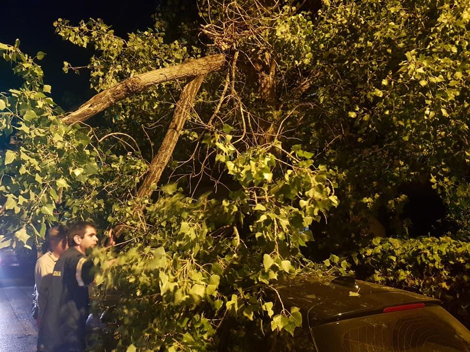 Βασίλης Σιαμάνης: Πτώση δέντρου στην οδό Ναυαρίνου άμεση η παρέμβαση