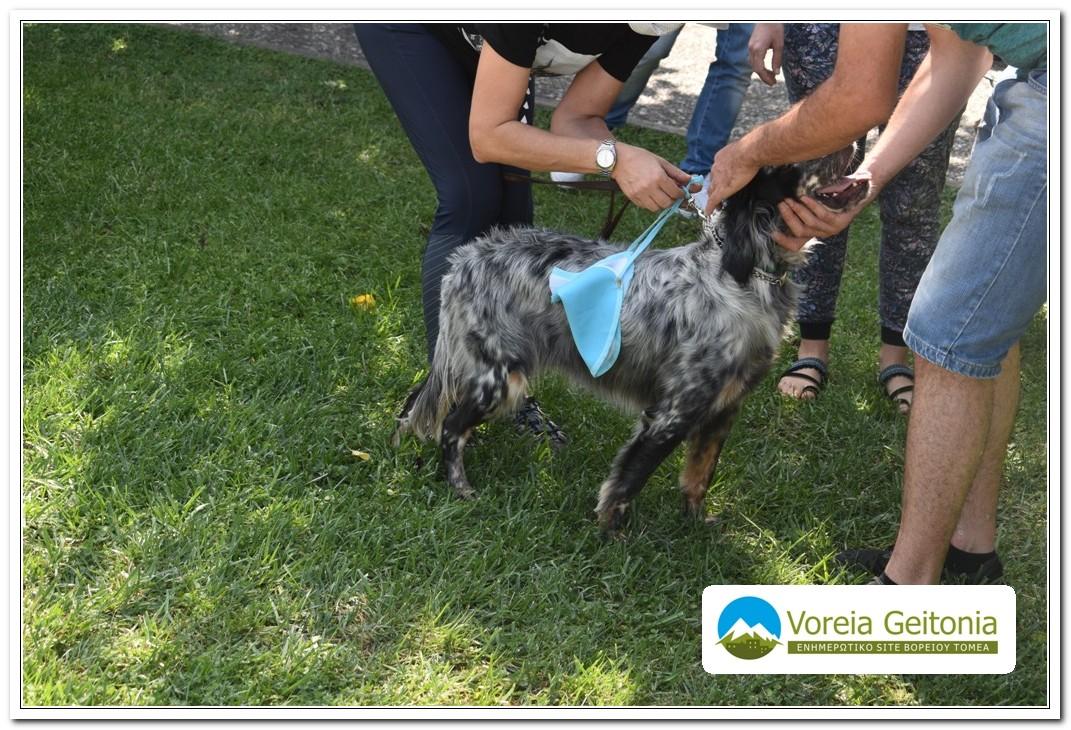 Φίλοι ζώων Παπάγου-Χολαργού: Γιορτή υιοθεσίας στο δημαρχείο Παπάγου - Χολαργού