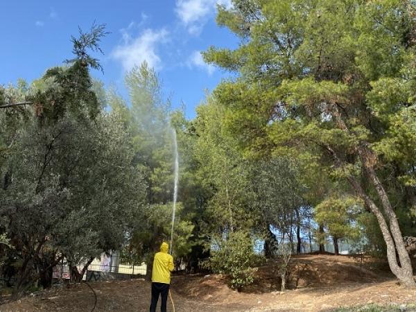 Ηλίας Αποστολόπουλος: Ψεκασμοί για την καταπολέμηση της πιτυοκάμπης